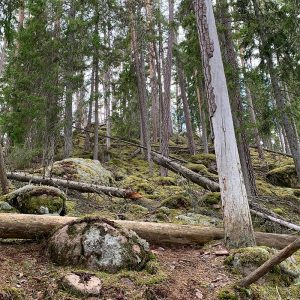 Norra Kvills Nationalpark